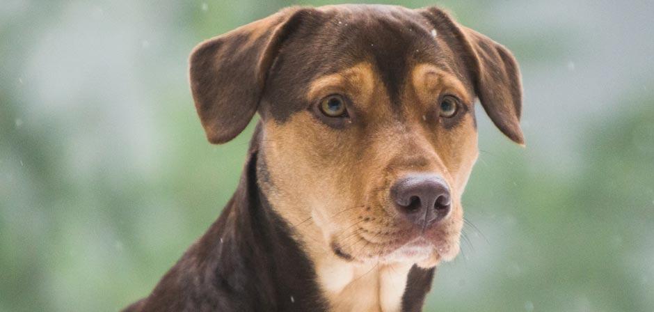 A Dog S Way Home Movie Review Spotlight Report